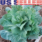 100+ ORGANICALLY GROWN GIANT Collard Georgia Southern Seeds Heirloom NON-GMO USA