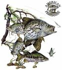Crappies Fish, Fishing New T-Shirt