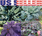 ORGANICALLY GROWN Kale Seeds Heirloom NON-GMO Lacinato Dinosaur Russian Red USA