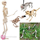 LIFE SIZE SKELETON PROP DECORATION HALLOWEEN FANCY DRESS PARTY CHOOSE STYLE