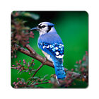 Blue Jay 2 - Oversized Rubber Coasters Set of 4 or 6
