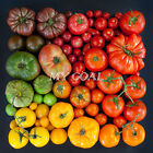 100Pcs Rare Seeds Tomato Black Cherry Russian Heirloom Vegetable Seed Plant New