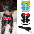 Lightweight Breathable Air Mesh Puppy Dog Car Harness Clip XS S M L + Lead 120CM