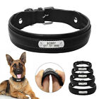 Personalised Leather Dog Collars for Big Dogs Padded X-Large Dog Collar Pit Bull