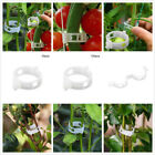 50/100 Plant Support Garden Clips Trellis Vine Vegetable Tomato Grow Upright B2U