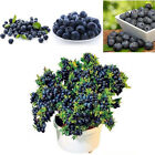 Delicious Blueberry fruit seeds rare fruits tree seeds for home garden plantings