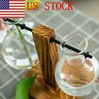 US Creative Glass Tabletop Plant Bonsai Flower Vase Wooden Tray Home Decor GIFT