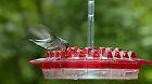 Hummingbird Feeder For Outdoor Hanging Yard Garden Decoration