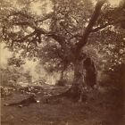 Foret De Fontainebleau William Drooke Harrison French Died 1893 Active 1860 1893