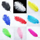 "Wholesale 50pcs Quality Natural Ostrich Feathers For Wedding 6-18"" Size/Colors"