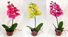 Mini Orchid Pot Plant Silk Artificial Flowers 3 Colours