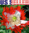 200+ Danish Flag Poppy Seeds Papaver Red Beautiful Flower from USA Free Shipping