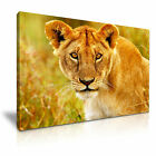 NEW ANIMAL Lion 1 Canvas Framed  Printed  Wall Art ~ More size