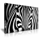 NEW ANIMAL Zebra 13 Canvas Framed Printed Wall Art ~ More Size