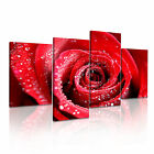 FLOWER Rose 17 Canvas 4A-RH Framed Printed Wall Art ~ 4 Panels
