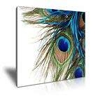 Peacock Feather Canvas Framed Print Wall Deco