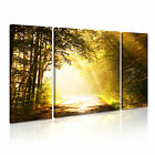 NATURE Landscape Forest 22 Canvas 3B Framed Printed Wall Art ~ 3 Panels