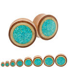 Pair Sawo Wood Crocodile Wood Crushed Turquoise Inlay Double Flare Saddle Plugs