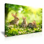 ANIMAL Rabbit Canvas Framed Printed Wall Art 1 ~ More Size