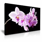 FLOWER Orchid Canvas Framed Printed Wall Art 13 ~ More Size