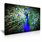 Peacock Canvas Animal Wall Art Home Office Deco 9 sizes