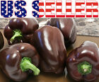 30+ ORGANICALLY GROWN Chocolate Beauty Sweet Pepper Seeds Heirloom NON-GMO Uniqu