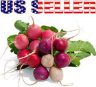 100+ ORGANICALLY GROWN Easter Egg Radish Blend Seeds Heirloom NON-GMO Colorful
