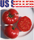 30+ ORGANICALLY GROWN Prudens Purple Tomato Seeds Russian Heirloom NON GMO RARE