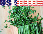 200+ ORGANICALLY GROWN Chives Seeds Heirloom NON-GMO Mild Onion Flavor Herb