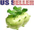 150+ ORGANICALLY GROWN White Vienna Kohlrabi Seeds Heirloom NON-GMO Sweet Turnip