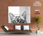 Stealthy Hiding Kitty Cat BW Animal Gigantic Print POSTER