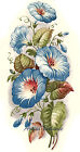 Ceramic Decals Blue Morning Glory Floral Flower image