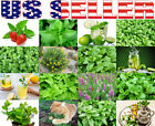 ORGANICALLY GROWN Mint Seeds Heirloom NON-GMO Mojito Catnip Lemon Balm Thai USA