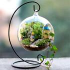 Clear Globe GLASS TERRARIUMS Wedding Party Gift Favors Ho...