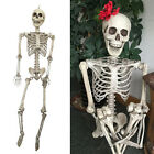 Halloween Skull Man Bone Life Size Realistic Party Human Skeleton Scaring Decor