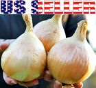 30+ ORGANICALLY GROWN GIANT 5 LB Ailsa Craig Onion Seeds Heirloom NON-GMO Mild