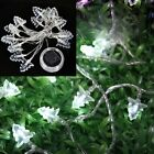 20LED White Solar Powered String Fairy Lights Christmas Xmas Party Wedding Decor
