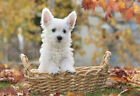 Puppy Thinks He's Toto In A Basket - Animal Poster Print - Dog Photo - Wall Art