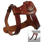 Top Genuine Leather Dog Harness Adjustable for Small Large Dogs Pit Bull Boxer