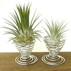 Air Plant Stand Holder Container Tillandsia Planter Desk Display Racks Decor 4pc