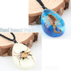 Real Scorpion Necklace Men's & Women's Pendant Insect Animal Amber Cool 3D Gift image