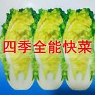 Yard Garden Vegetable Seeds  NON-GMO Economic Colorful retail package picture