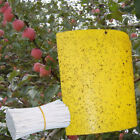 Strong Flies Traps Bugs Sticky Board Catching Aphid Insects Killer Pest Control