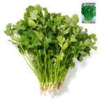 Chinese Vegetable Seeds yard garden Colorful retail package 原装彩包春秋播蔬菜种子