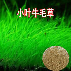 Lots Aquarium Plant Seeds Aquatic Double Leaf Carpet Water Grass Fish Tank Decor