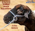 Halter All SMALL Yearling Calf, Mini Cow Endless Adjustable Breaking PATTERN USA
