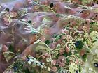 "NEW High Class Designer Multi Colour Pearl Floral Border Lace Fabric 54"" 139 cm"