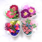Dried Flowers Nail Art Decorations 3D Colors Natural Flora UV Gel Polish Tips