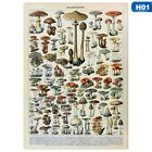 Vintage Mushroom Chart Biology Science Silk Poster Educational Art Print OiRrE