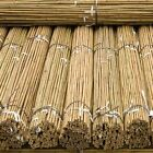Strong Heavy Duty Professional Bamboo Plant Support  Canes 2ft-3ft-4ft-5ft-6ft